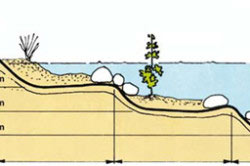 Плавательный водоем в ландшафтном дизайне