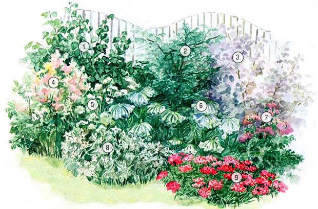 план схема посадки цветника в саду с ирисами пионами астильбой хостой 620 x 409 · jpeg