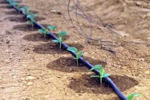Крымское сельское хозяйство перейдет на капельное орошение