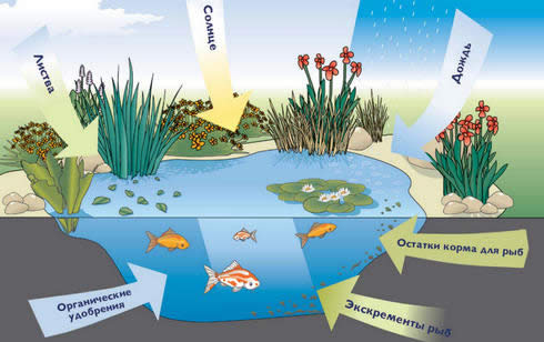 Основные причины загрязнения садового водоема.