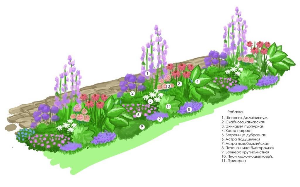 Схема посадки цветочного оформления - рабатки.