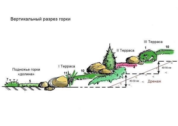 Вертикальный разрез альпийской