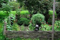 Деревенский сад
