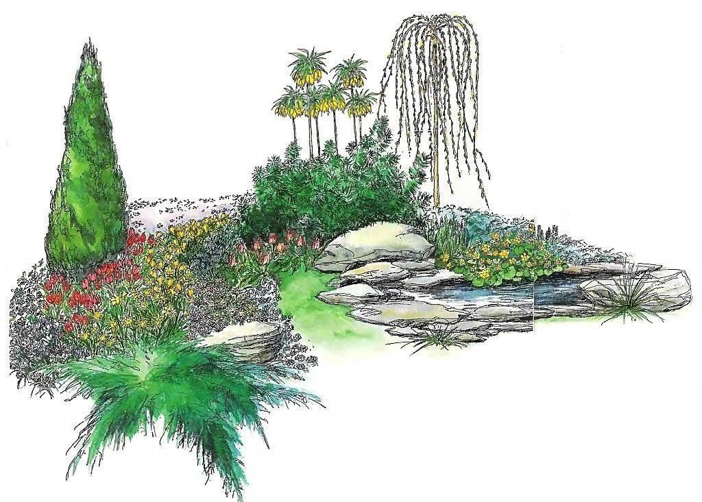 Горная сосна в ландшафтном дизайне фото