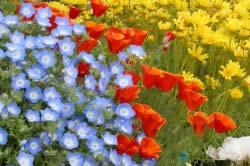 Существуют тысячи разновидностей садовых цветов. Каждый дачник выбирает на свой вкус и цвет.
