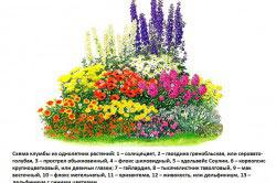 Схема клумбы из однолетних растений