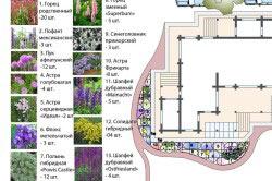 Ориентировочный план высадки растений на дачном участке