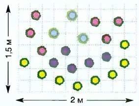 Схема посадки растений в клумбе