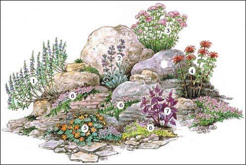 Растения альпийской горки своими руками
