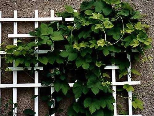 Шпалера для вьющихся растений своими руками.