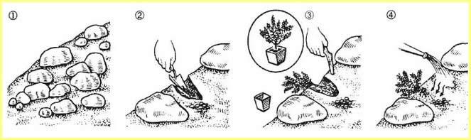 Схема посадки растения на