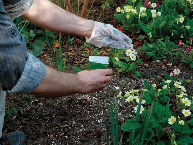 Для того, чтобы сад радовал Вас, за цветами необходимо за ними ухаживать.