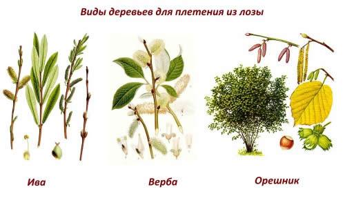 Виды плетения деревьев