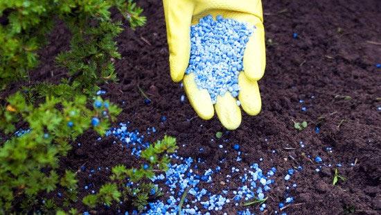 Для того, чтобы Ваши цветы цвели и пахли их необходимо удобрять.
