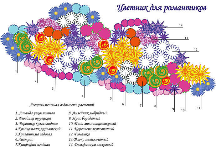 Схема растений для цветника.