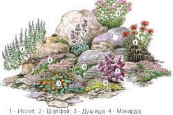 Схема альпийской горки из пряных цветов