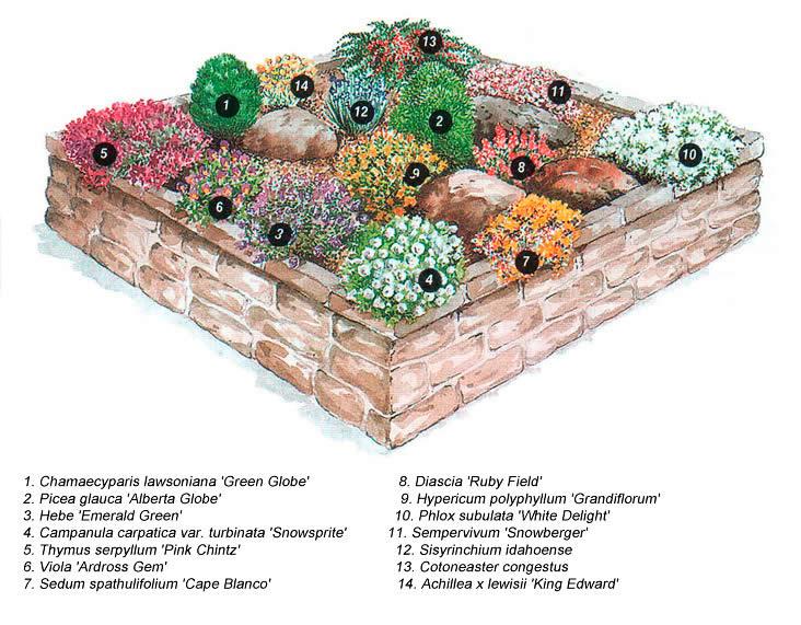 Подбор растений для альпийской горки своими руками 13