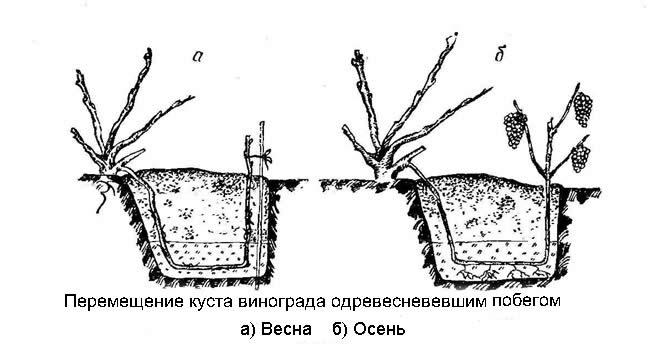 Схема перемещения куста