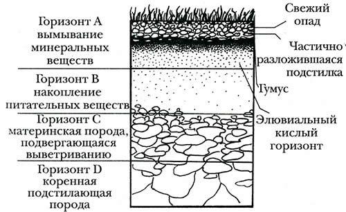 Подготовка почвы под клумбу