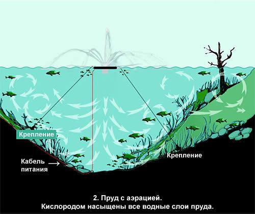 разведение в пруду толстолобик гибридный