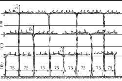 Схема размещения и формирования кустов винограда