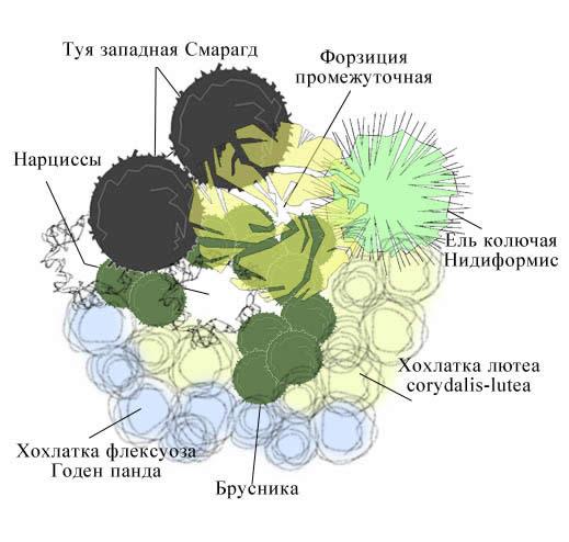 Растения для солнечных мест