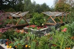 Совмещение сада и огорода