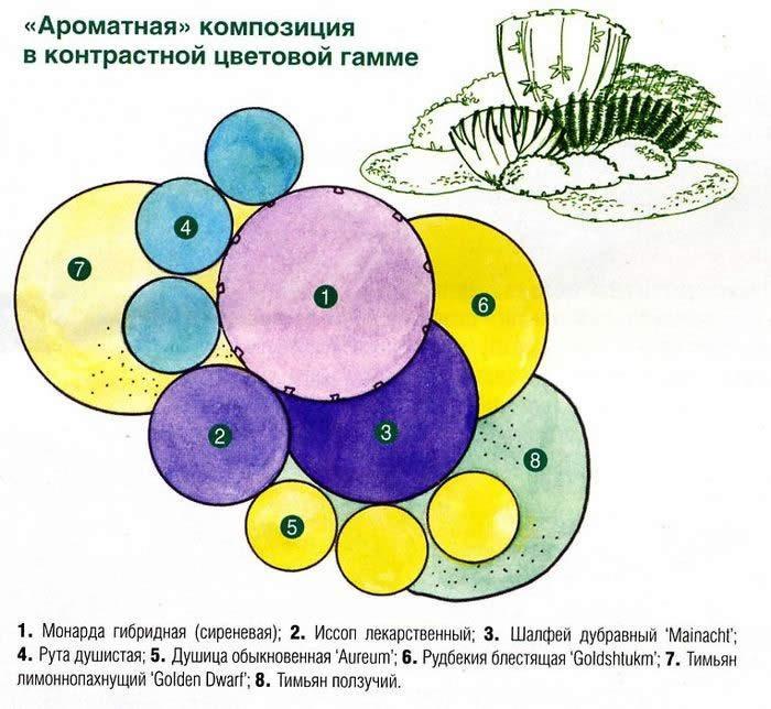 Схемы сочетание цветов на клумбе