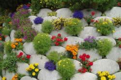 Правильная посадка цветов в клумбе