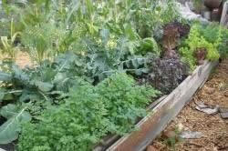 Гряда, на которой посажены разные овощи