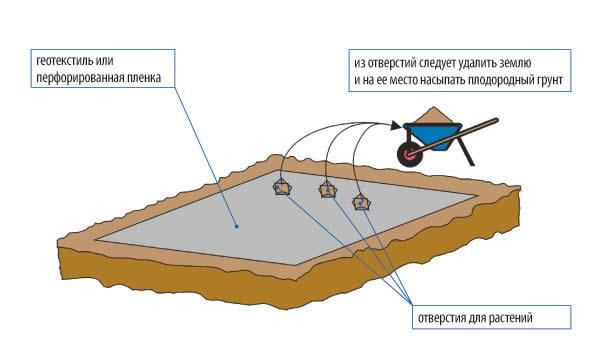 Схема подготовка места для саженцев в гравийной клумбе.