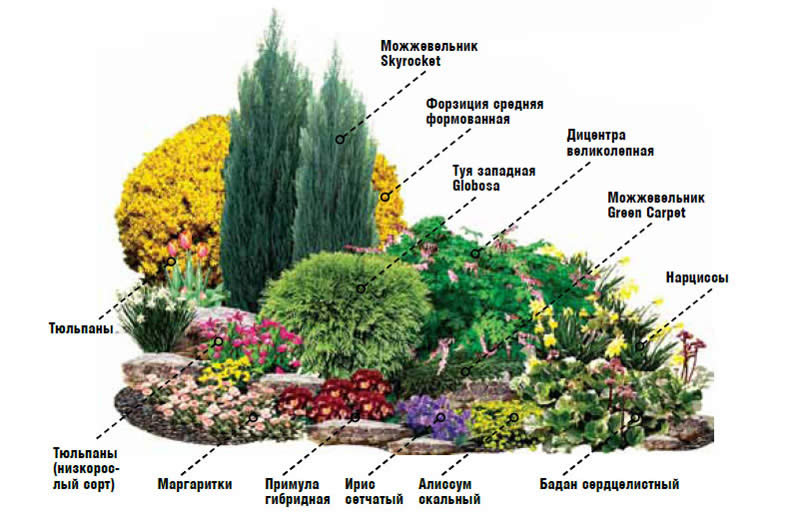 Схема миксбордера непрерывного цветения