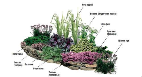 Схема клумбы с полезными растениями