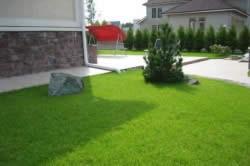 Побегоносные травы для газона