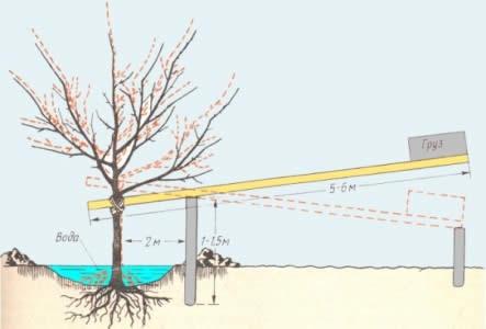 Схема исправления неправильной посадки дерева