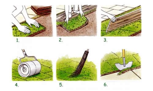 Этапы укладки газона