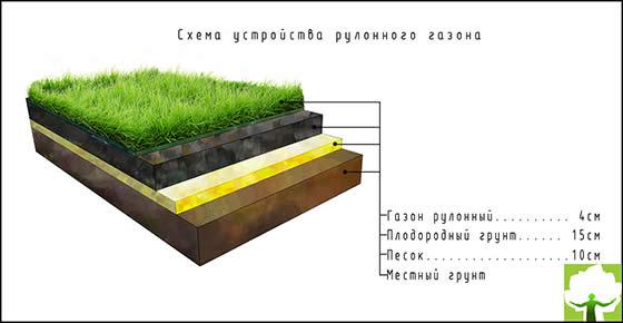 Схема устройства рулонного газона