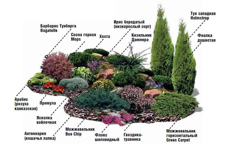 Схема расположения растений на альпийской горке