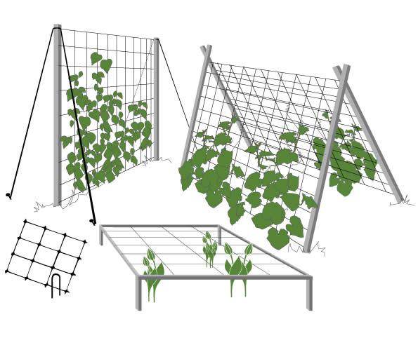 Шпалерная сетка используется для поддержки цветов с длинными стеблями.