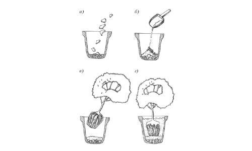 Схема пересадки цветов