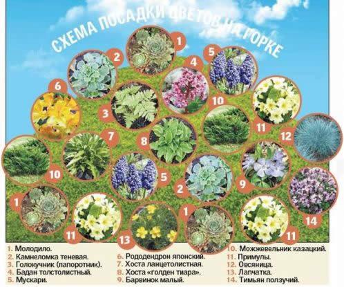 Схема посадки растений на