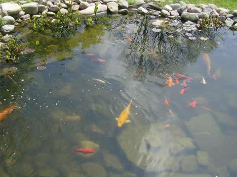 Как сделать водоем для разведение рыбы