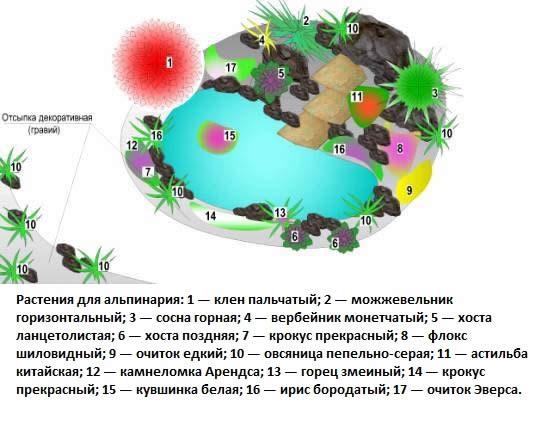 Схема альпинария с водоемом