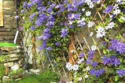 Деревянная шпалера на дачном участке