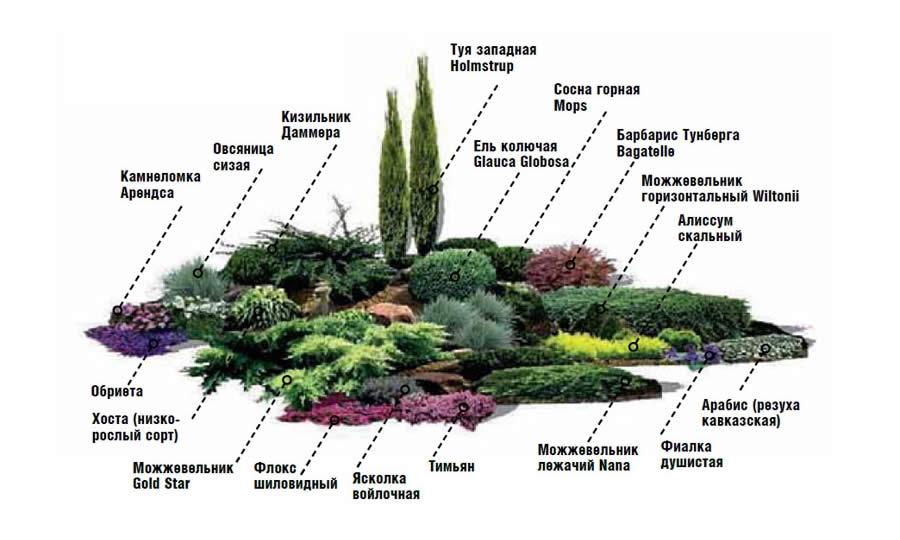 Схема посадки растений альпийской горке