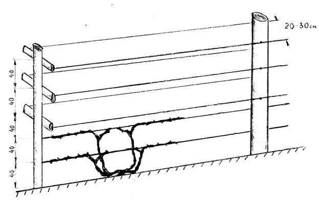 Схема монтажа шпалеры из