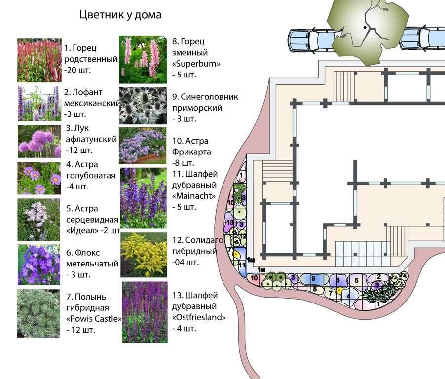 Схема посадки растений в теневой цветник.