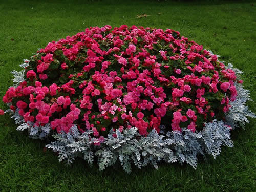 Клумба с садовыми цветами фото
