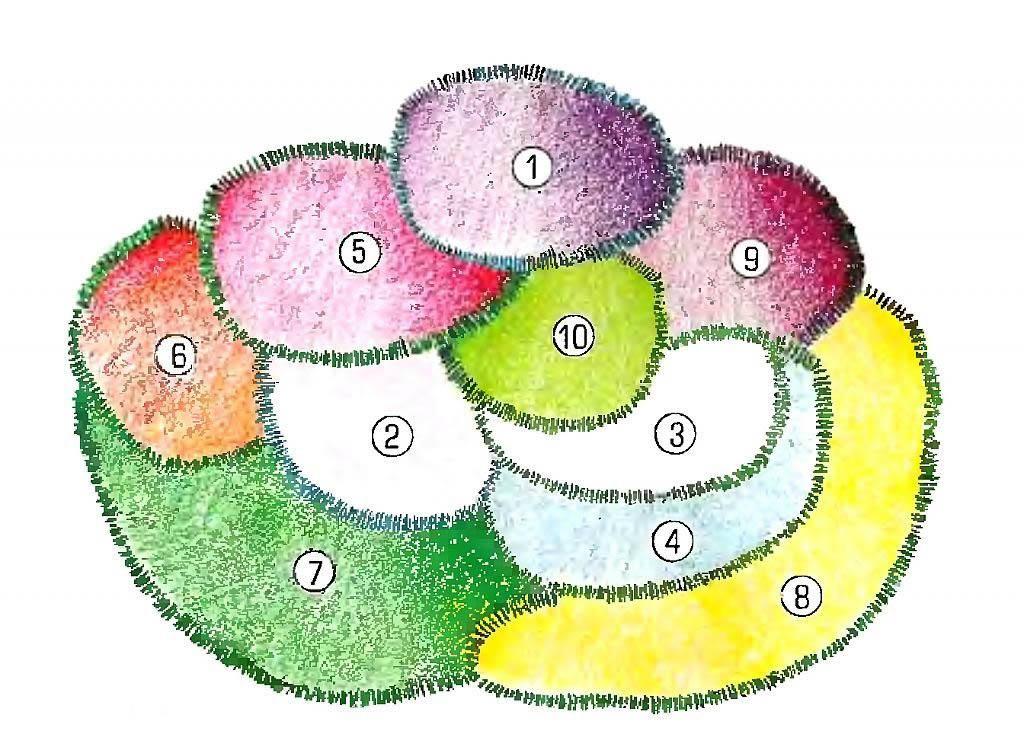 картинки схем цветников себя